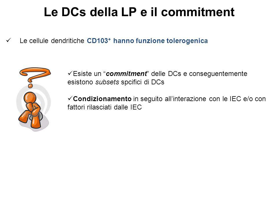 Le DCs della LP e il commitment Le cellule dendritiche CD103 + hanno funzione tolerogenica Esiste un commitment delle DCs e conseguentemente esistono subsets spcifici di DCs Condizionamento in seguito all'interazione con le IEC e/o con fattori rilasciati dalle IEC