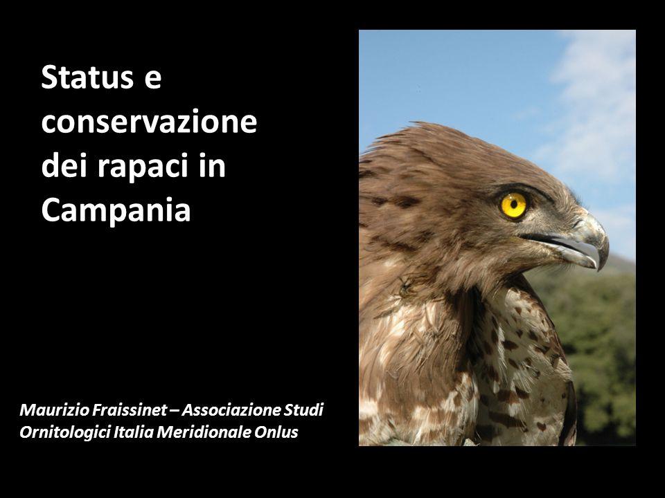 19 Accipitridi : 8 nidificanti, 6 svernanti e migratrici, 4 accidentali 1 Pandionide : migratrice 9 Falconidi : 4 – 5 nidificanti, 3 migratrici, 1 accidentale