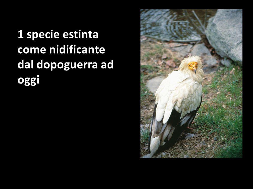1 specie per la quale non ci sono al momento prove certe di nidificazione