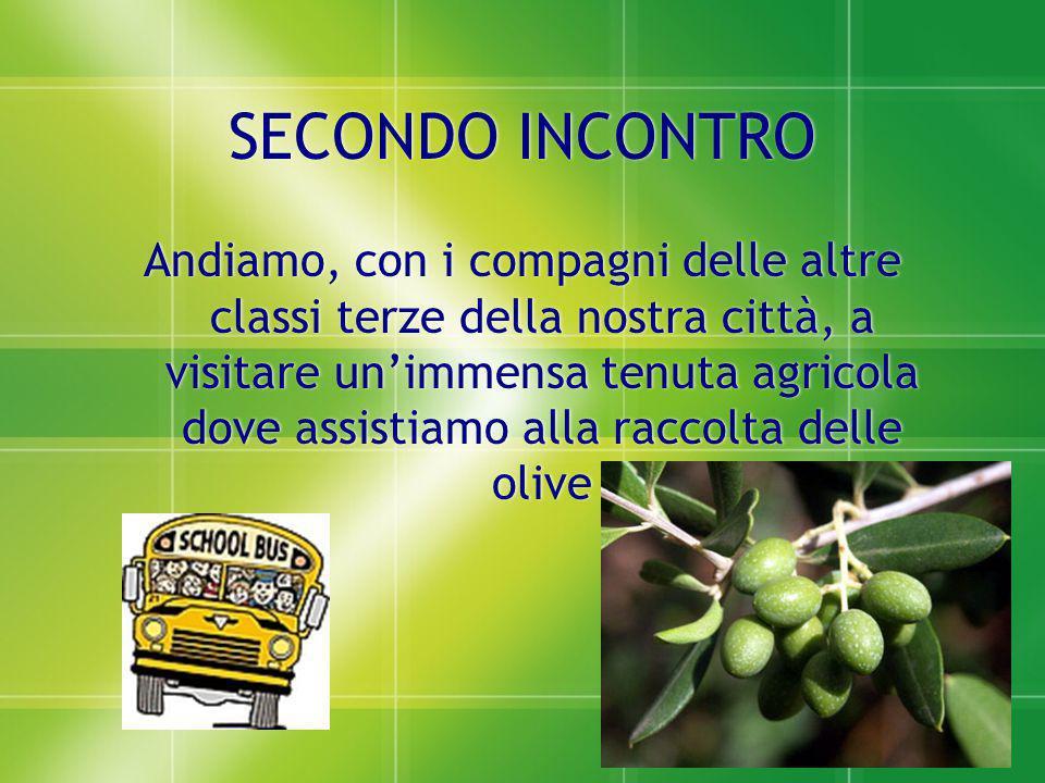 Raccolta delle olive Raccolta delle olive