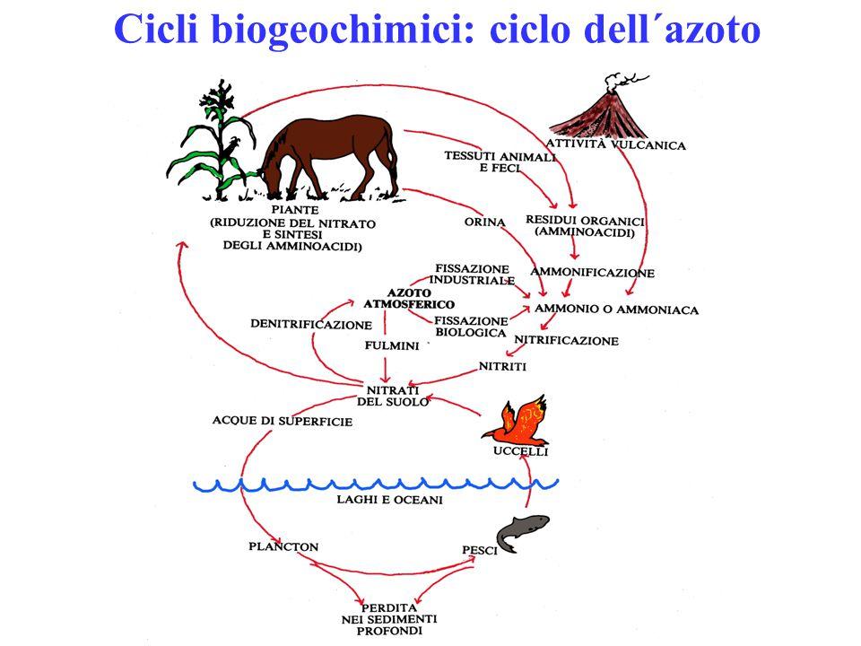 Cicli biogeochimici: ciclo dell´azoto