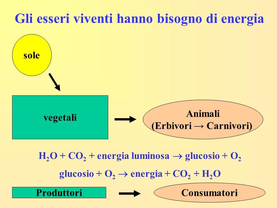 Gli esseri viventi hanno bisogno di energia sole vegetali Animali (Erbivori → Carnivori) H 2 O + CO 2 + energia luminosa  glucosio + O 2 glucosio + O