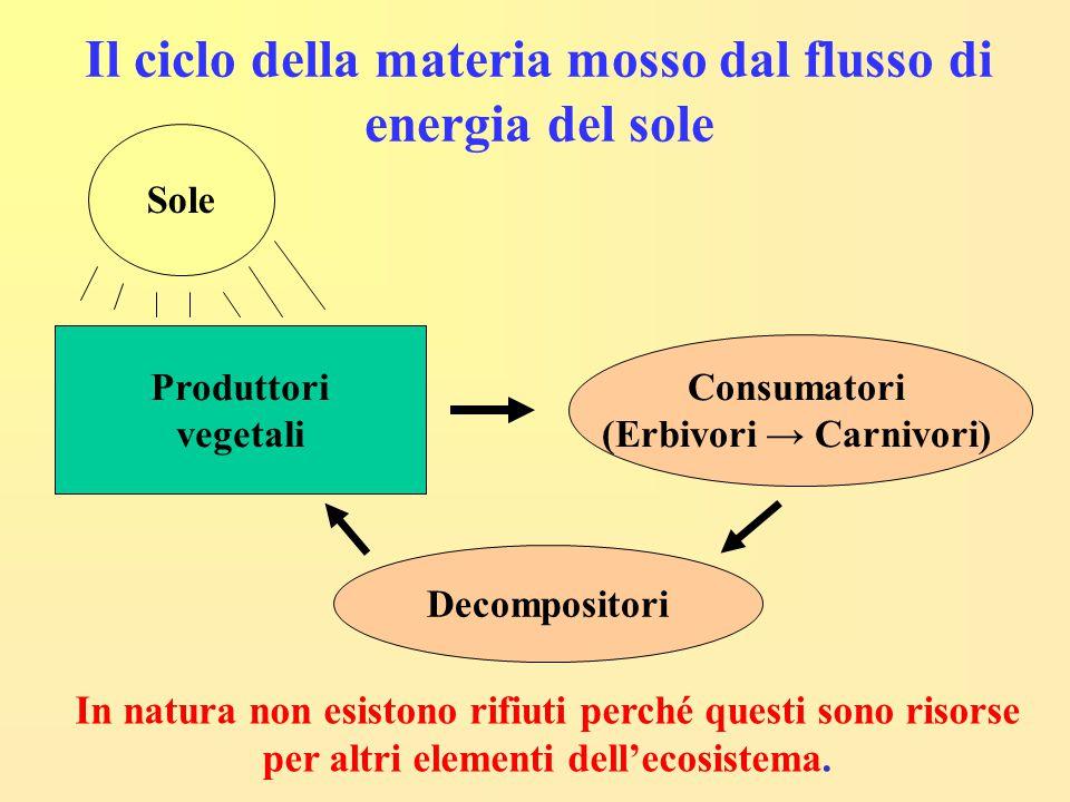 Il ciclo della materia mosso dal flusso di energia del sole Produttori vegetali Consumatori (Erbivori → Carnivori) Decompositori Sole In natura non es