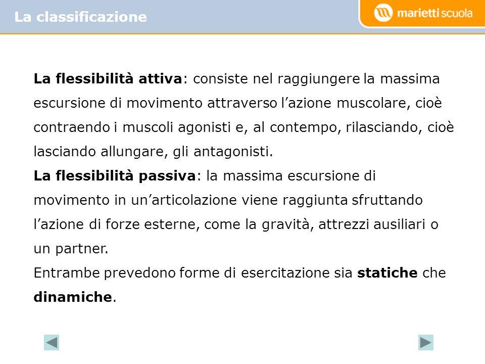 La classificazione La flessibilità attiva: consiste nel raggiungere la massima escursione di movimento attraverso l'azione muscolare, cioè contraendo i muscoli agonisti e, al contempo, rilasciando, cioè lasciando allungare, gli antagonisti.