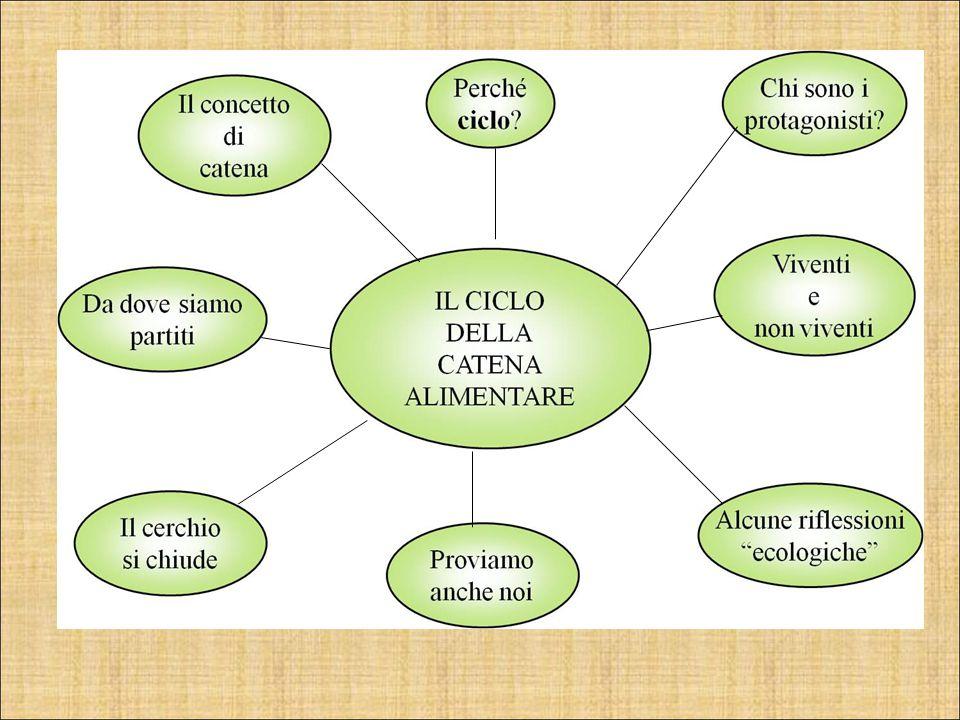 """Il ciclo della catena alimentare Scuola primaria """"Giovanni Cena"""" Perugia Anno Scolastico 2010/2011"""