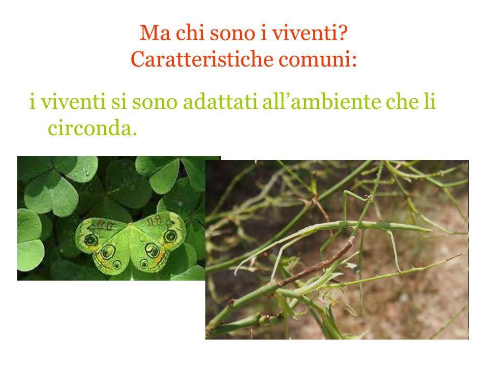 Ma chi sono i viventi? Caratteristiche comuni: i viventi si sono adattati all'ambiente che li circonda.