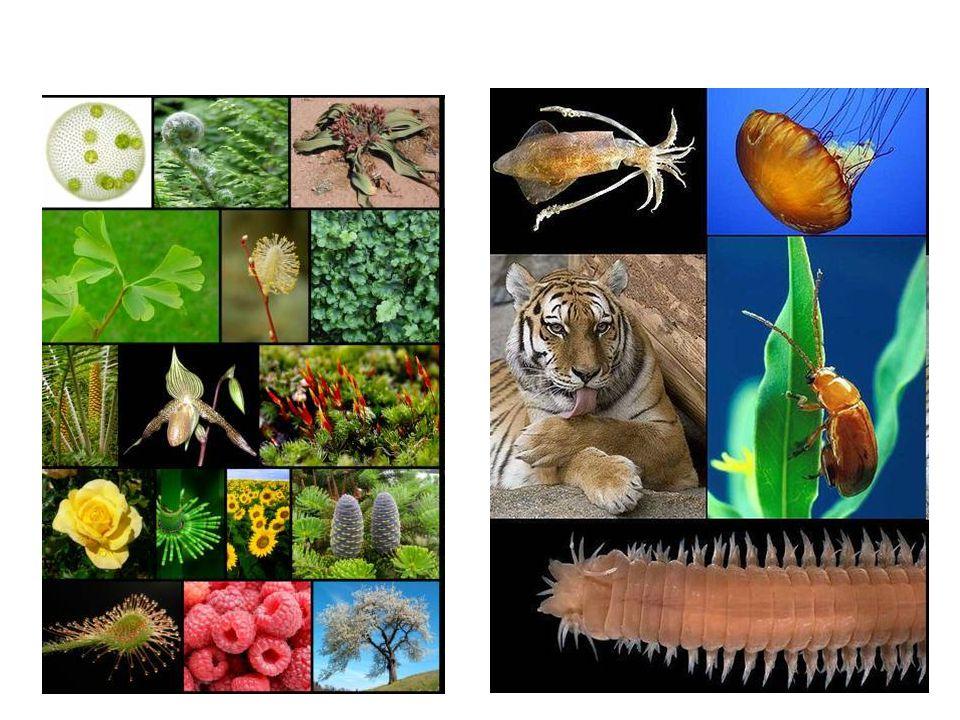 Ma chi sono i viventi? Caratteristiche comuni: I viventi si evolvono nel tempo