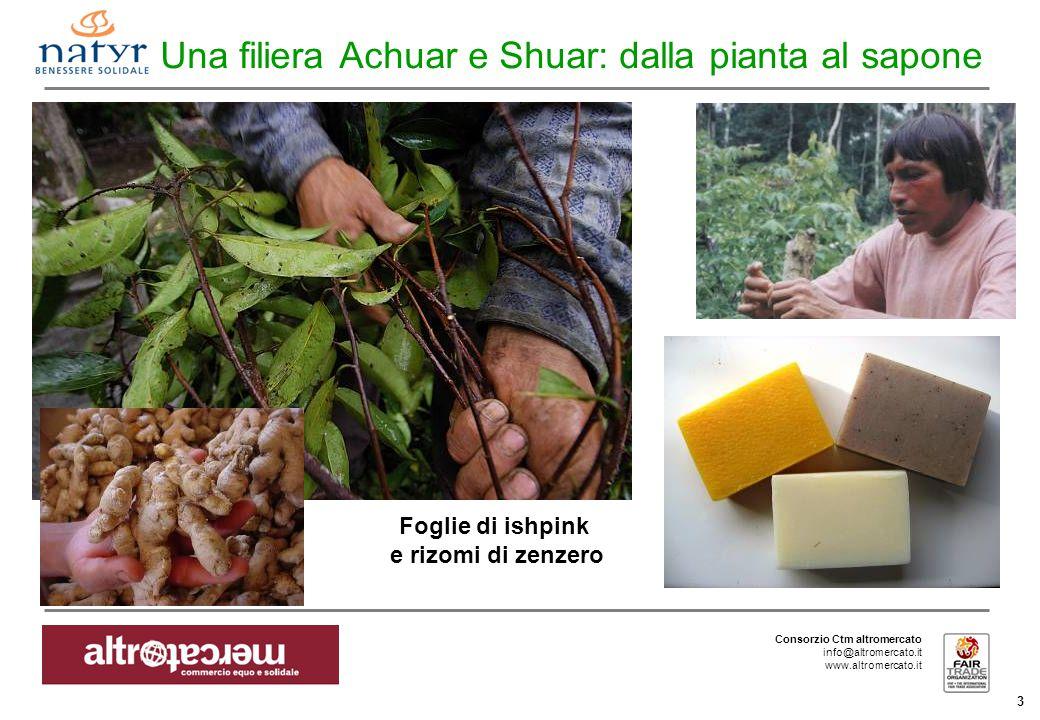 Consorzio Ctm altromercato info@altromercato.it www.altromercato.it 3 Una filiera Achuar e Shuar: dalla pianta al sapone Foglie di ishpink e rizomi di