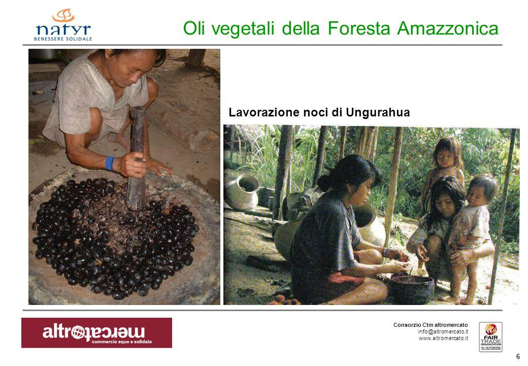 Consorzio Ctm altromercato info@altromercato.it www.altromercato.it 6 Oli vegetali della Foresta Amazzonica Lavorazione noci di Ungurahua