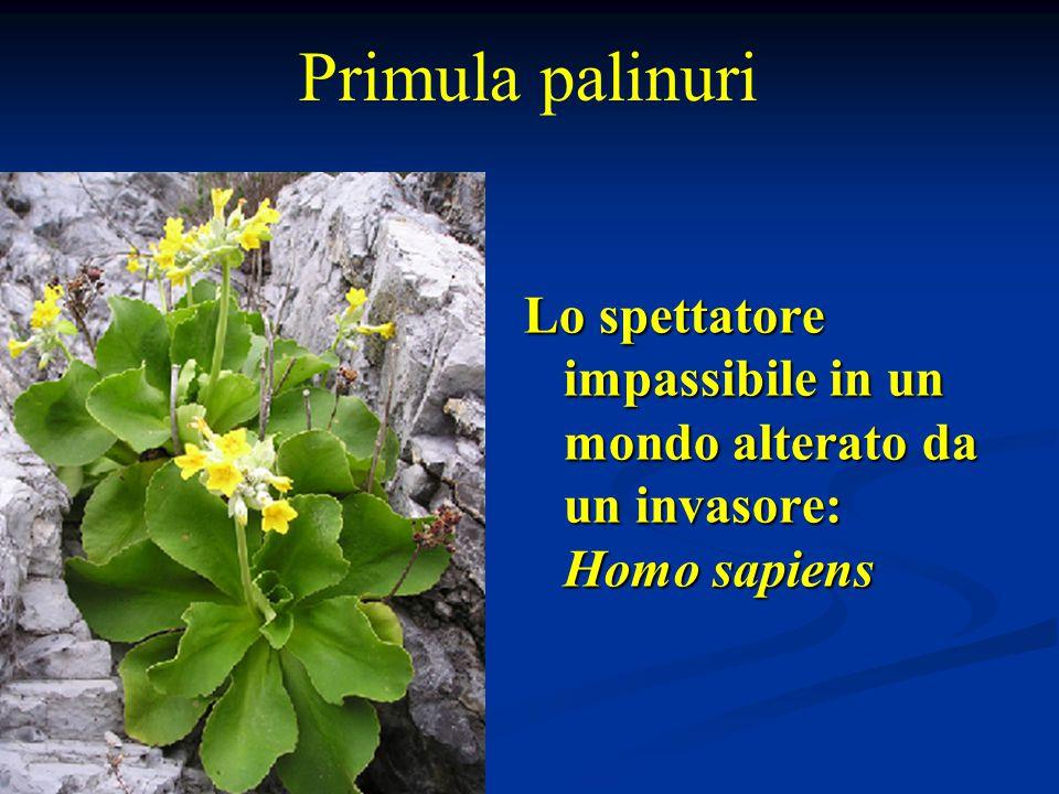 Lo spettatore impassibile in un mondo alterato da un invasore: Homo sapiens Primula palinuri