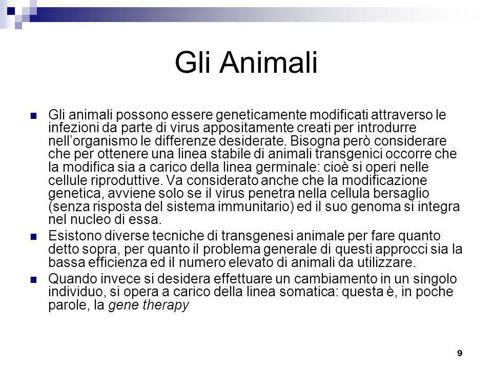 9 Gli Animali Gli animali possono essere geneticamente modificati attraverso le infezioni da parte di virus appositamente creati per introdurre nell'organismo le differenze desiderate.