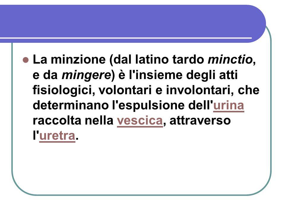 La minzione (dal latino tardo minctio, e da mingere) è l'insieme degli atti fisiologici, volontari e involontari, che determinano l'espulsione dell'ur