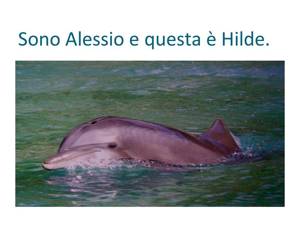 Sono Alessio e questa è Hilde.
