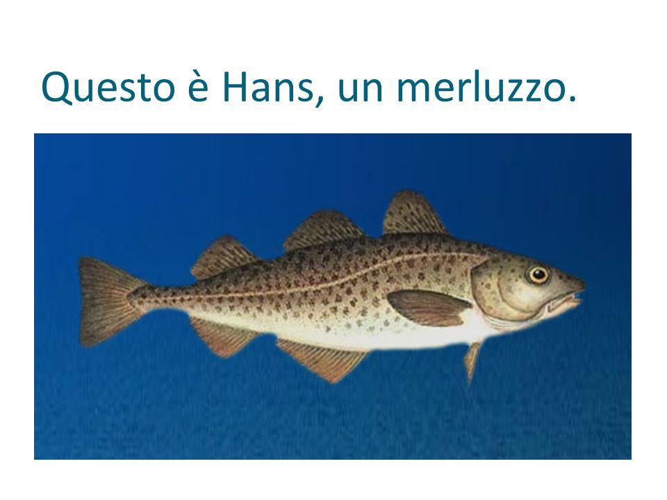 Questo è Hans, un merluzzo.
