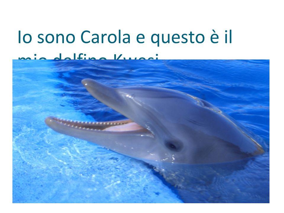Io sono Carola e questo è il mio delfino Kwesi.