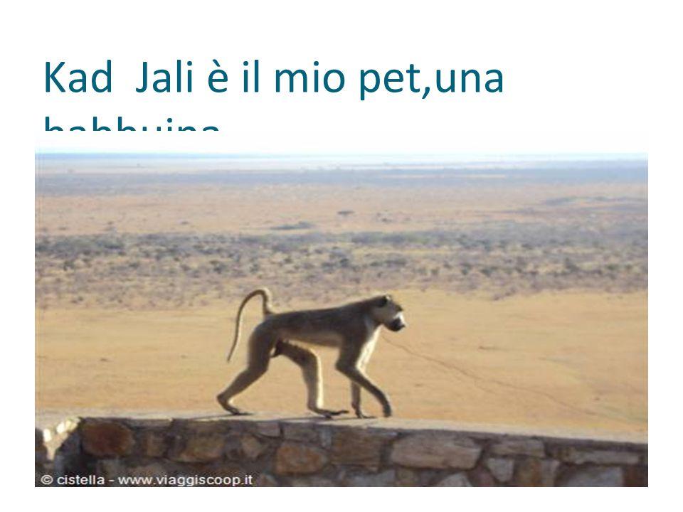 Kad Jali è il mio pet,una babbuina.