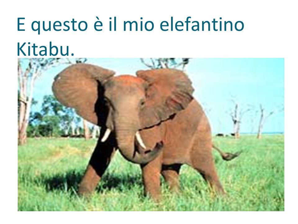 E questo è il mio elefantino Kitabu.