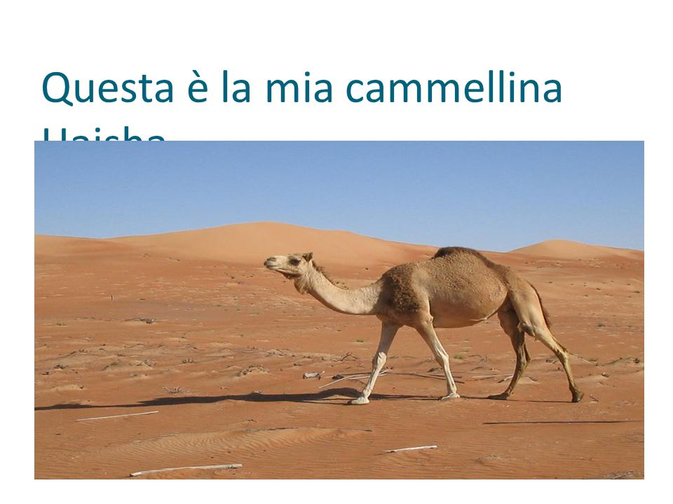 Questa è la mia cammellina Haisha.