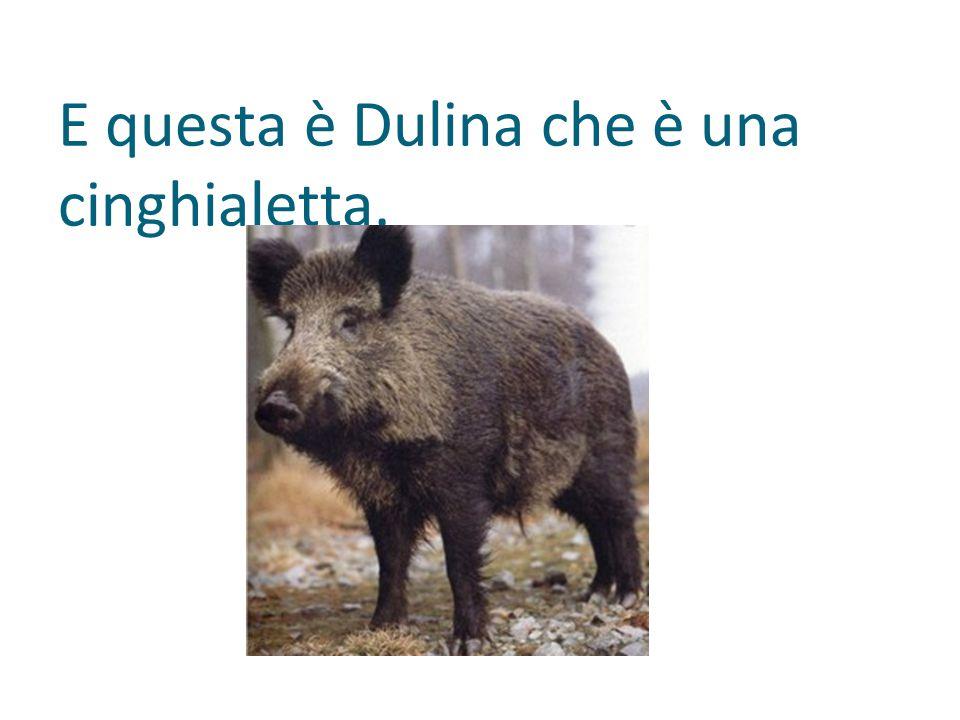 E questa è Dulina che è una cinghialetta.