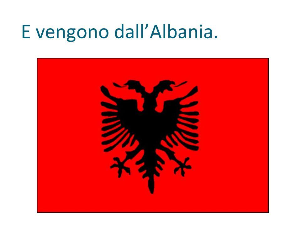 E vengono dall'Albania.