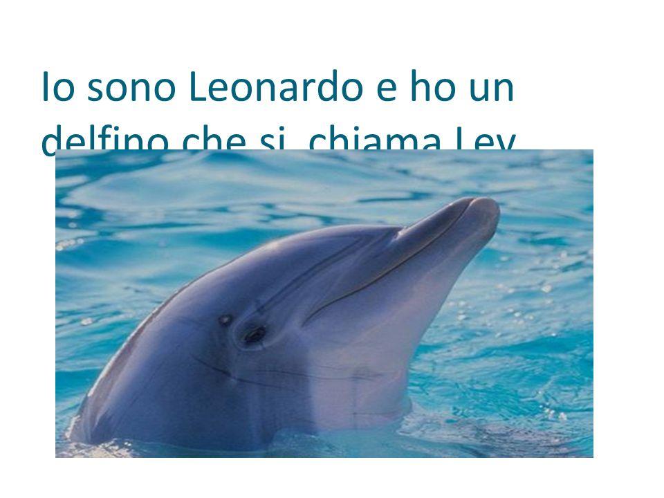 Io sono Leonardo e ho un delfino che si chiama Lev.