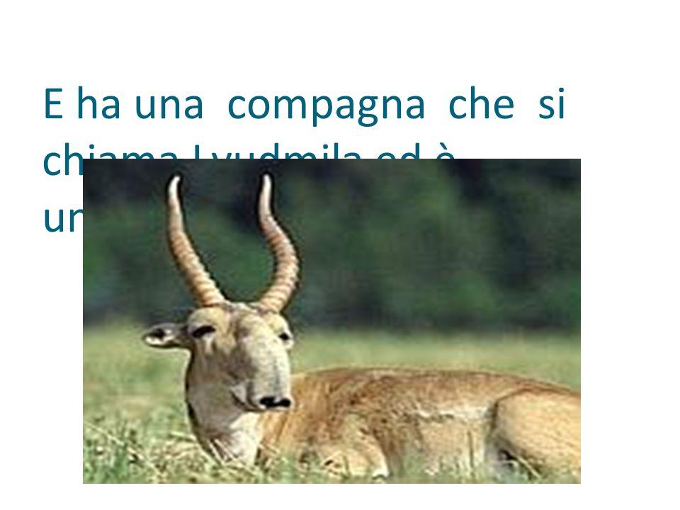 E ha una compagna che si chiama Lyudmila ed è un'antilope delle steppe.