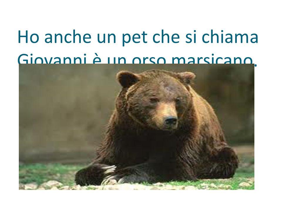 Ho anche un pet che si chiama Giovanni,è un orso marsicano.