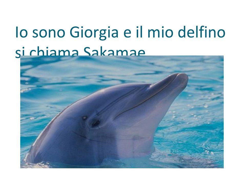 Io sono Giorgia e il mio delfino si chiama Sakamae.