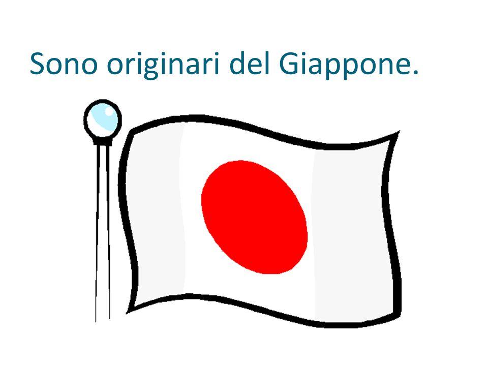Sono originari del Giappone.