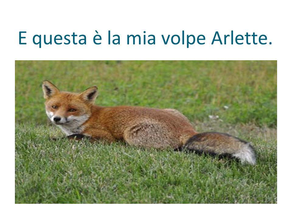 E questa è la mia volpe Arlette.
