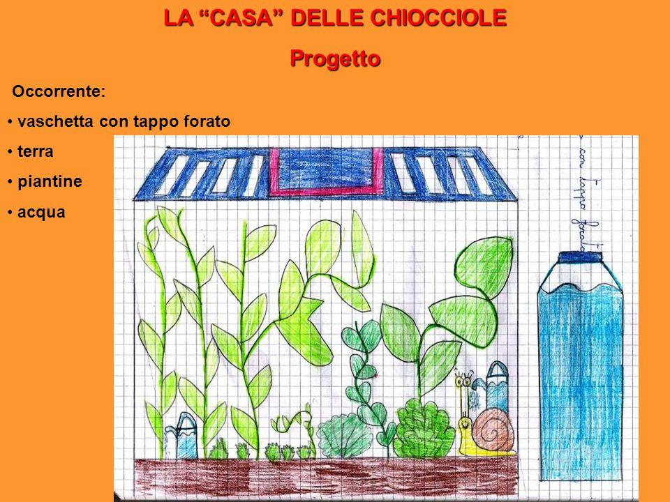 """LA """"CASA"""" DELLE CHIOCCIOLE Progetto Occorrente: vaschetta con tappo forato terra piantine acqua"""