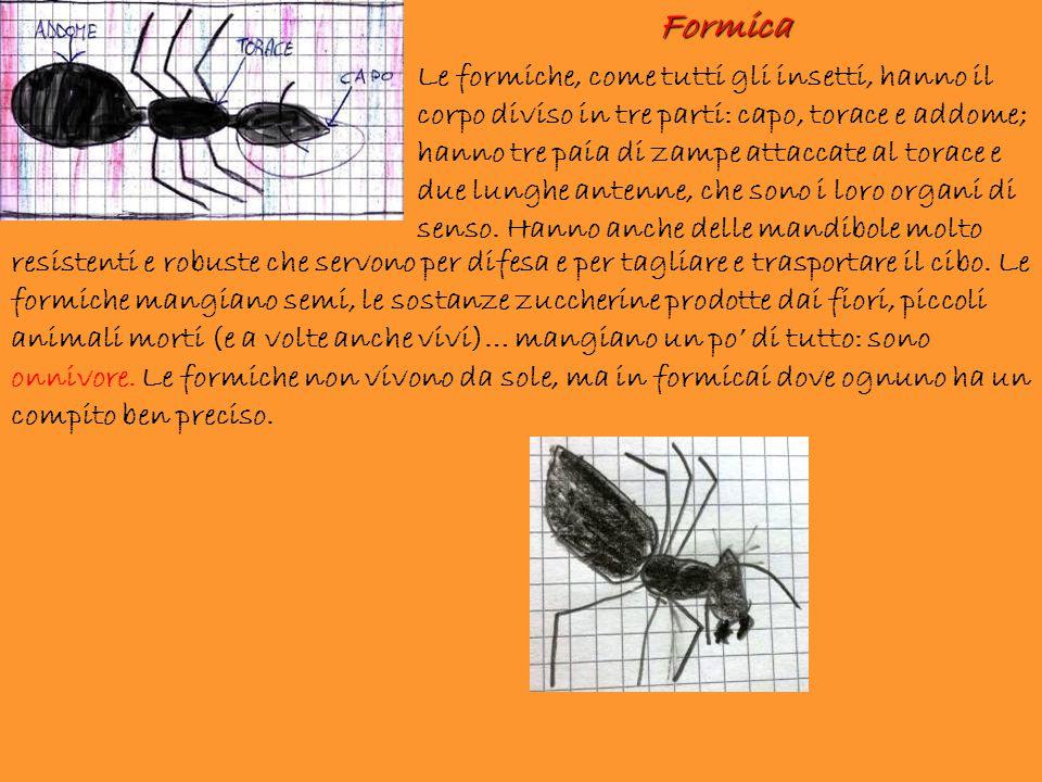 resistenti e robuste che servono per difesa e per tagliare e trasportare il cibo. Le formiche mangiano semi, le sostanze zuccherine prodotte dai fiori