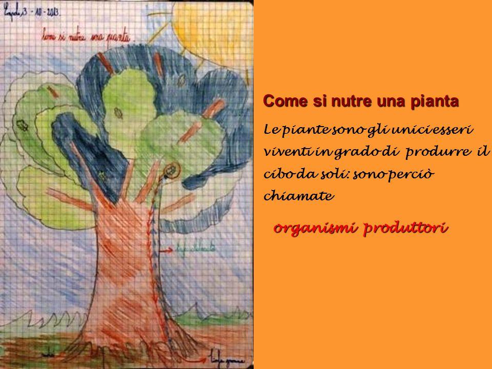 Come si nutre una pianta Le piante sono gli unici esseri viventi in grado di produrre il cibo da soli: sono perciò chiamate organismi produttori organ