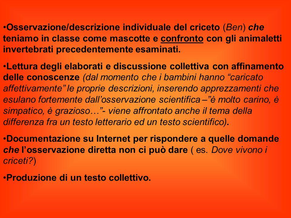 Osservazione/descrizione individuale del criceto (Ben) che teniamo in classe come mascotte e confronto con gli animaletti invertebrati precedentemente