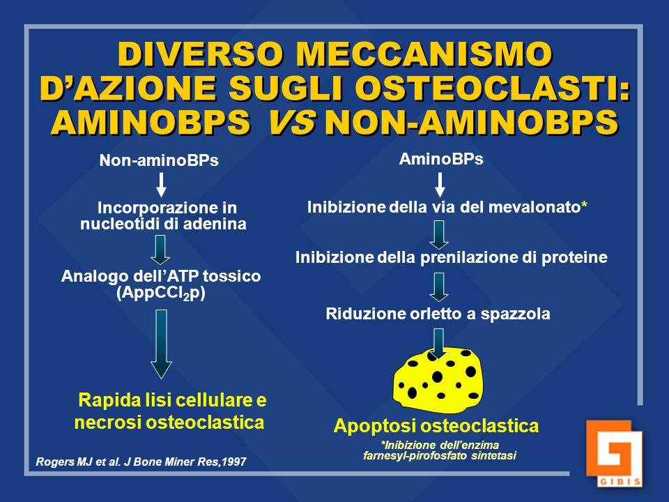 DIVERSO MECCANISMO D'AZIONE SUGLI OSTEOCLASTI: AMINOBPS VS NON-AMINOBPS Non-aminoBPs Incorporazione in nucleotidi di adenina Analogo dell'ATP tossico