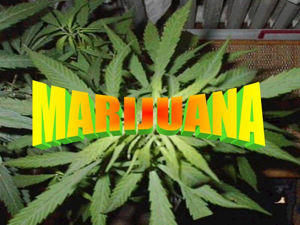LE DROGHE CHE AFFRONTEREMO SARANNO : MARIJUANA ECSTASY DOPING