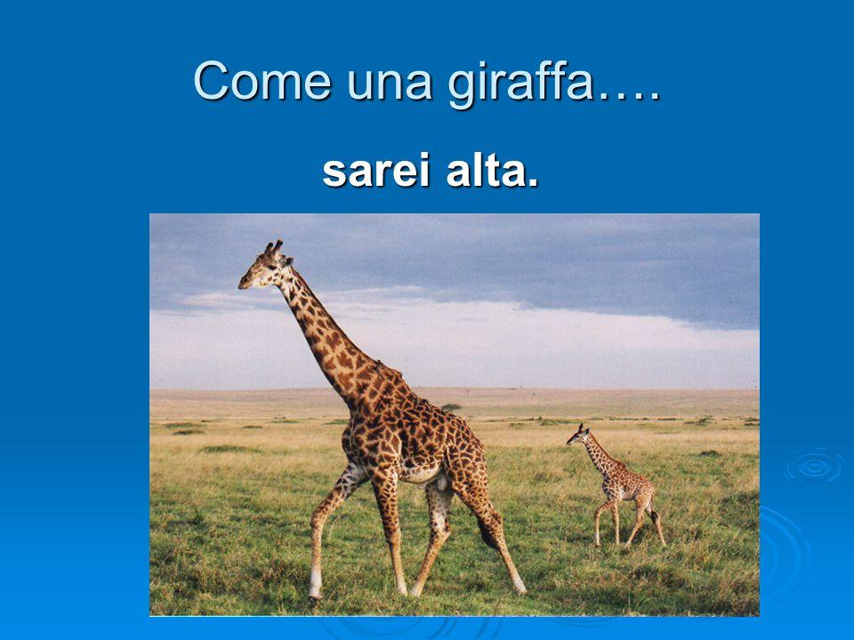 Come una giraffa…. sarei alta.