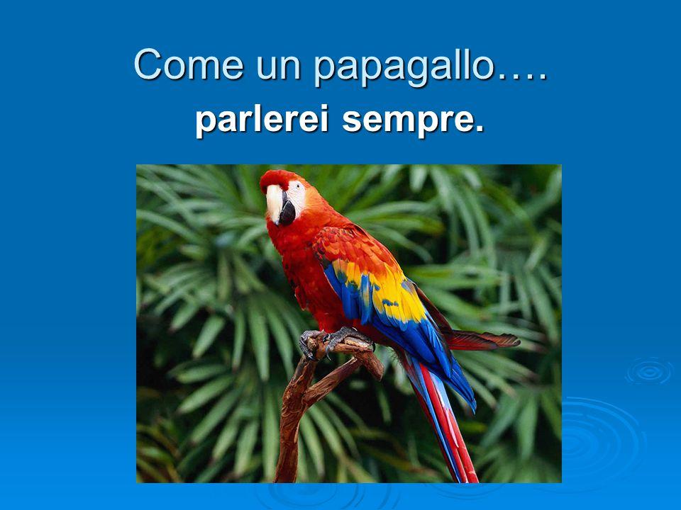 Come un papagallo…. parlerei sempre.