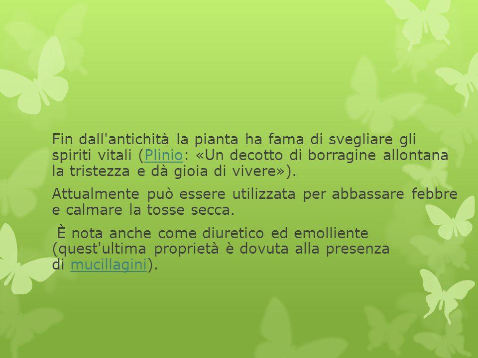 Fin dall'antichità la pianta ha fama di svegliare gli spiriti vitali (Plinio: «Un decotto di borragine allontana la tristezza e dà gioia di vivere»).P
