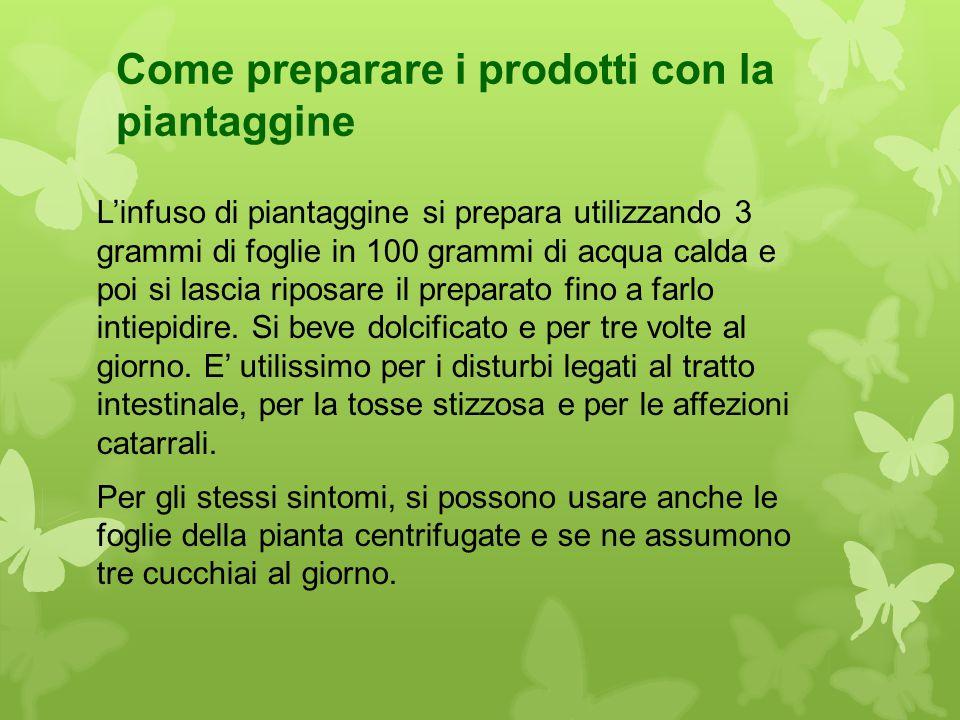 Come preparare i prodotti con la piantaggine L'infuso di piantaggine si prepara utilizzando 3 grammi di foglie in 100 grammi di acqua calda e poi si l