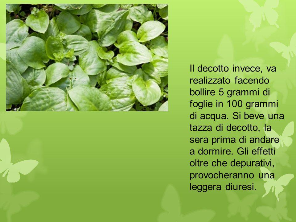 Il decotto invece, va realizzato facendo bollire 5 grammi di foglie in 100 grammi di acqua. Si beve una tazza di decotto, la sera prima di andare a do