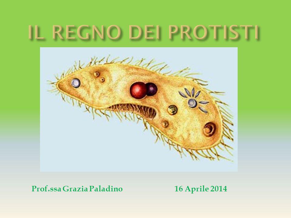 Prof.ssa Grazia Paladino16 Aprile 2014