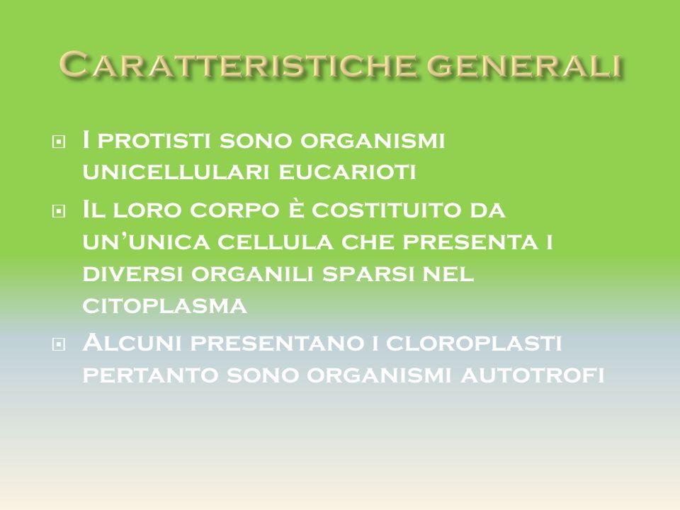  I protisti sono organismi unicellulari eucarioti  Il loro corpo è costituito da un'unica cellula che presenta i diversi organili sparsi nel citopla