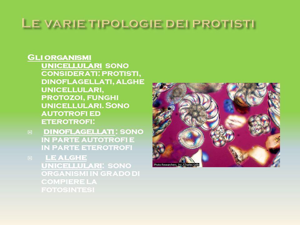 Gli organismi unicellulari sono considerati: protisti, dinoflagellati, alghe unicellulari, protozoi, funghi unicellulari. Sono autotrofi ed eterotrofi