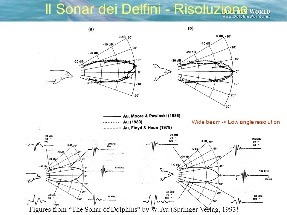 """Il Sonar dei Delfini - Risoluzione Figures from """"The Sonar of Dolphins"""" by W. Au (Springer Verlag, 1993) Wide beam -> Low angle resolution"""