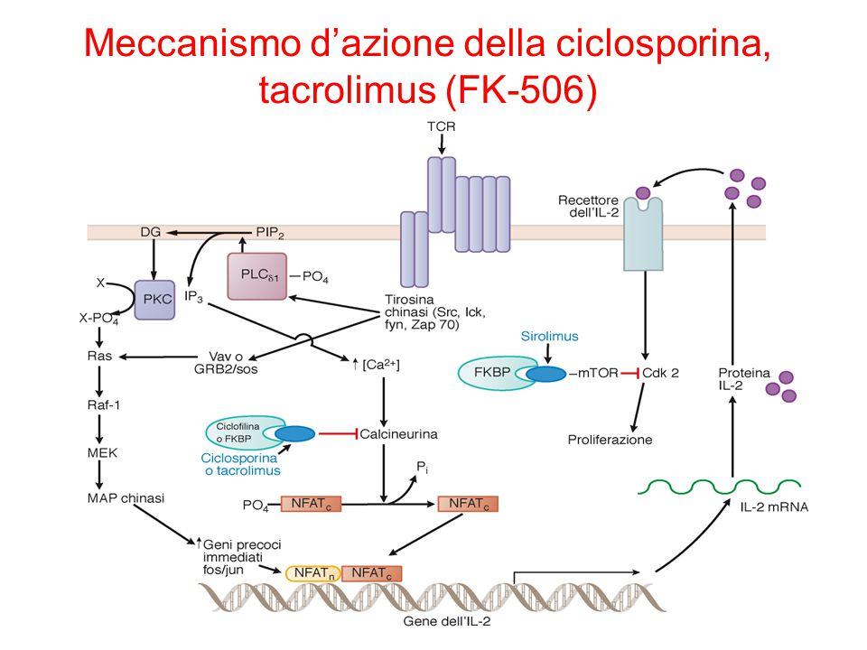 Meccanismo d'azione della ciclosporina, tacrolimus (FK-506)