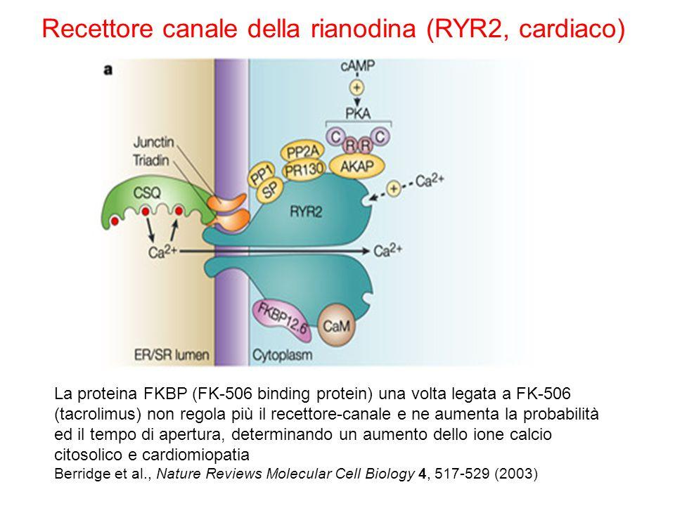 La proteina FKBP (FK-506 binding protein) una volta legata a FK-506 (tacrolimus) non regola più il recettore-canale e ne aumenta la probabilità ed il tempo di apertura, determinando un aumento dello ione calcio citosolico e cardiomiopatia Berridge et al., Nature Reviews Molecular Cell Biology 4, 517-529 (2003) Recettore canale della rianodina (RYR2, cardiaco)