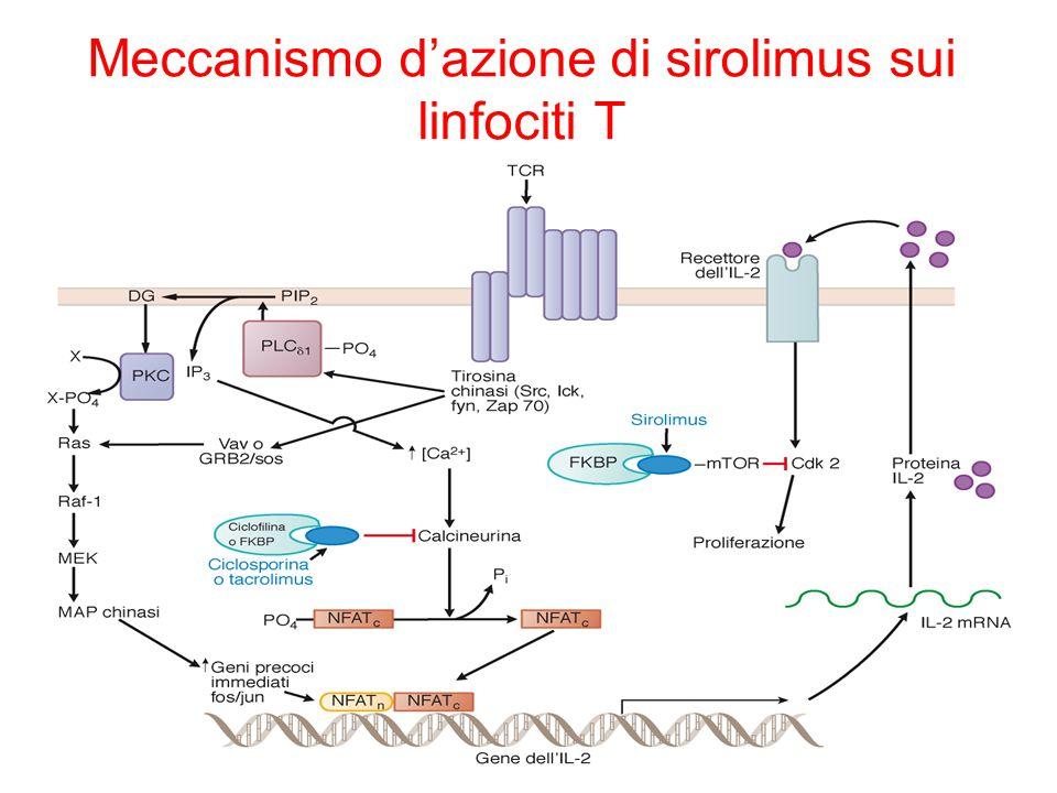 Meccanismo d'azione di sirolimus sui linfociti T