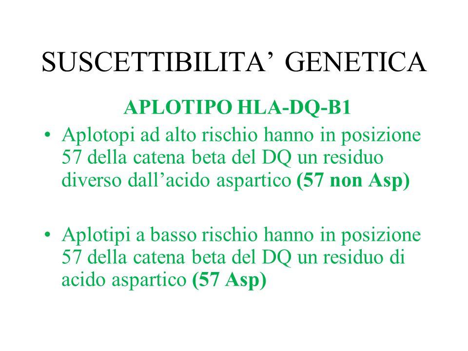 SUSCETTIBILITA' GENETICA APLOTIPO HLA-DQ-B1 Aplotopi ad alto rischio hanno in posizione 57 della catena beta del DQ un residuo diverso dall'acido aspa