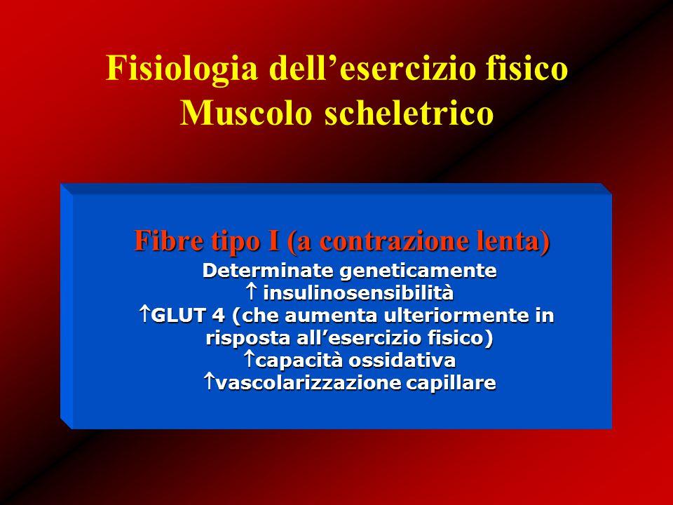 Fisiologia dell'esercizio fisico Muscolo scheletrico Fibre tipo I (a contrazione lenta) Determinate geneticamente  insulinosensibilità GLUT 4 (che a